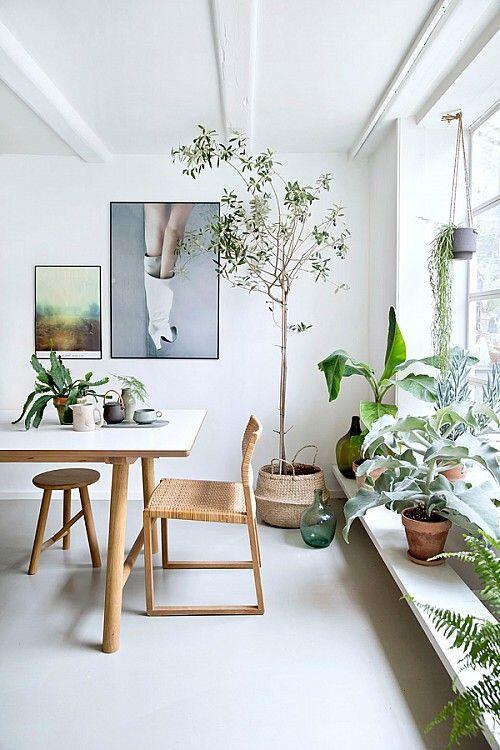 Urban jungle je životný štýl - preto sa hodí do akéhokoľvek typu interiéru