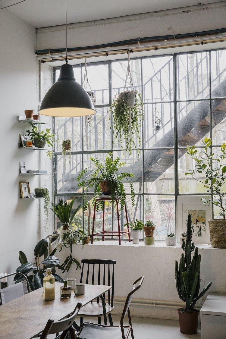 Záplava rastlín osvieži a zútulní váš interiér a navyše prečistí vzduch