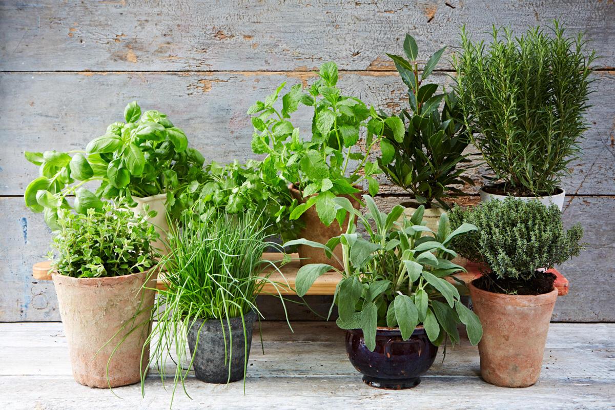 Vyberte si bylinky, ktoré máte najradšej - pestovanie je jednoduché!