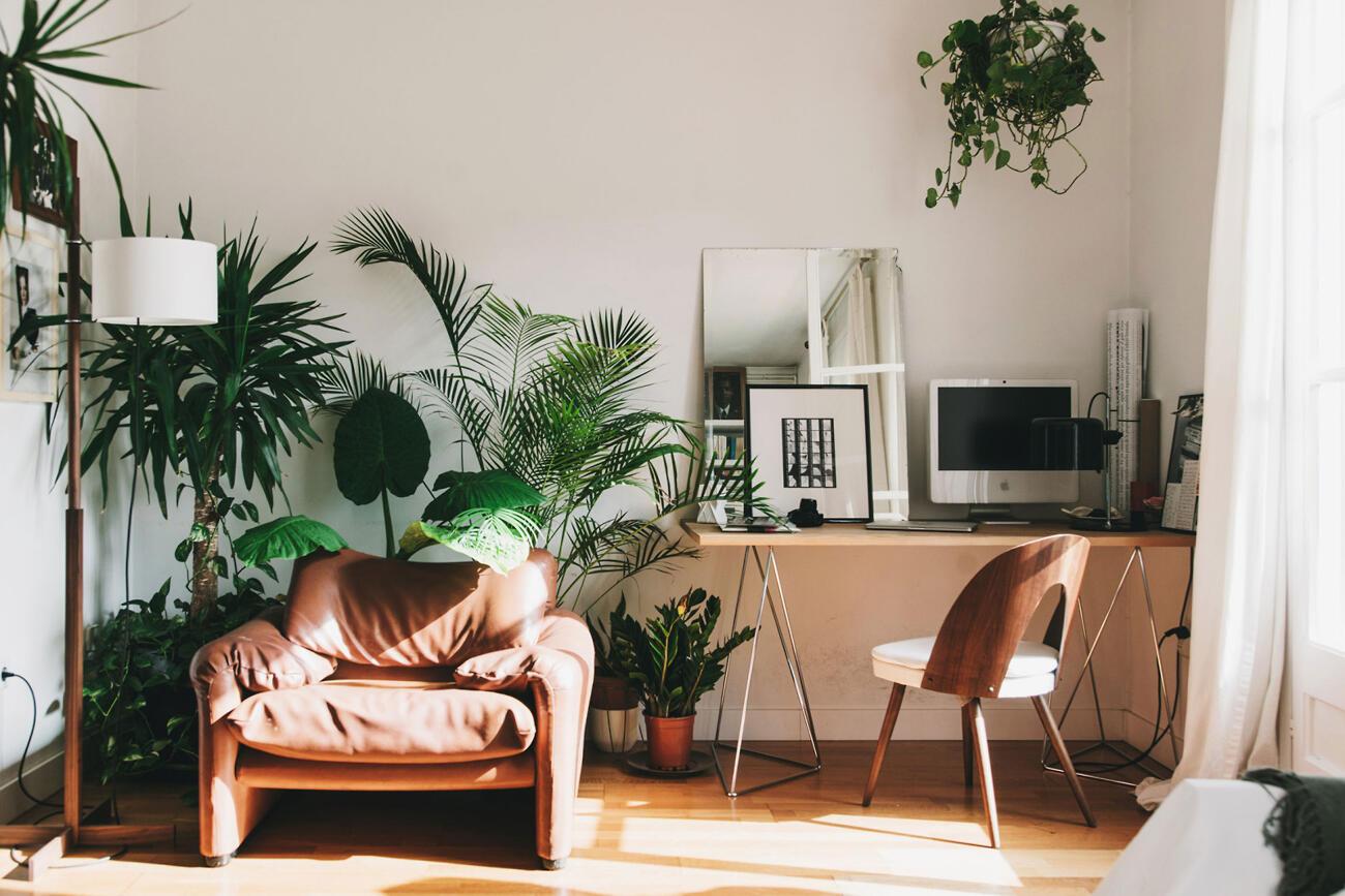 Zelenými rastlinami sa v štýle urban jungle nešetrí - čím viac, tým lepšie