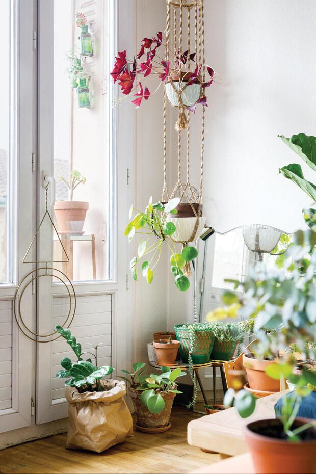Kombinácia rôznych druhov rastlín aj kvetináčov dokáže vyčarovať kúzelné zátišie