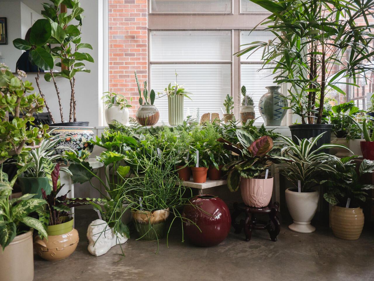 Izbových rastlín, ktoré čistia vzduch a zároveň sú krásne a dekoratívne, máte na výber veľa