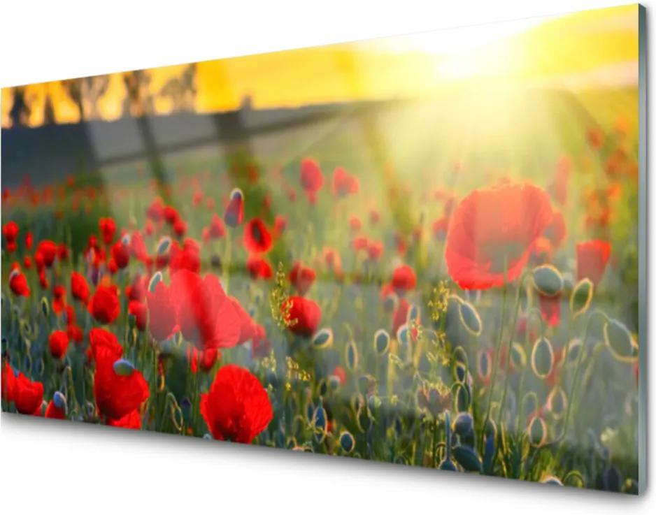 Obraz plexi Lúka Maky Rastlina Príroda