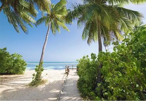 Vliesové fototapety, rozmer 368 cm x 254 cm, palmová pláž, Sunny Decor SD945