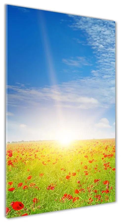 Foto obraz akrylový na stenu Pole makov pl-oa-70x140-f-107946485