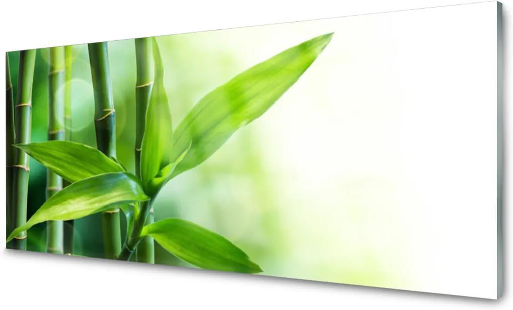 Obraz plexi Bambus List Rastlina Príroda
