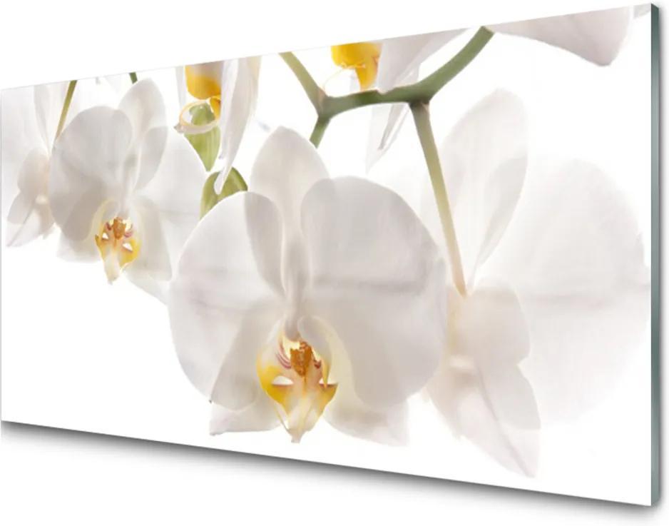 Skleněný obraz Orchidej Květiny Příroda