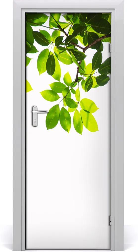 Fototapeta na dveře Zelené listí