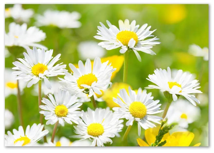 Foto obraz fotografie na skle Sedmokrásky pl-osh-100x70-f-84307575