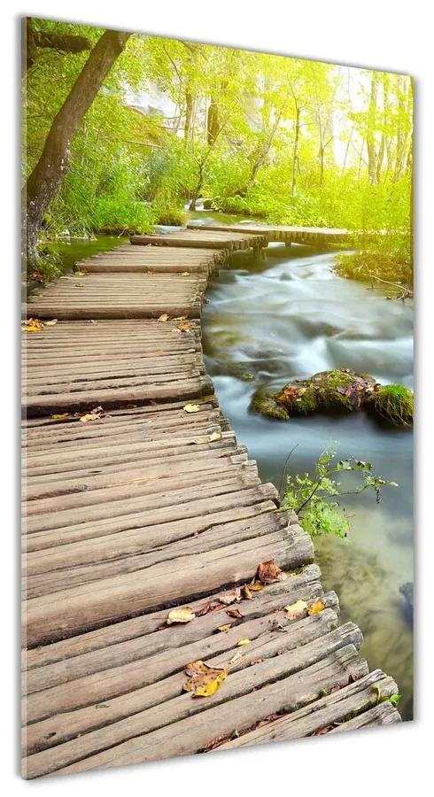 Foto obraz akrylové sklo Chodník v lese pl-oa-70x140-f-46793485