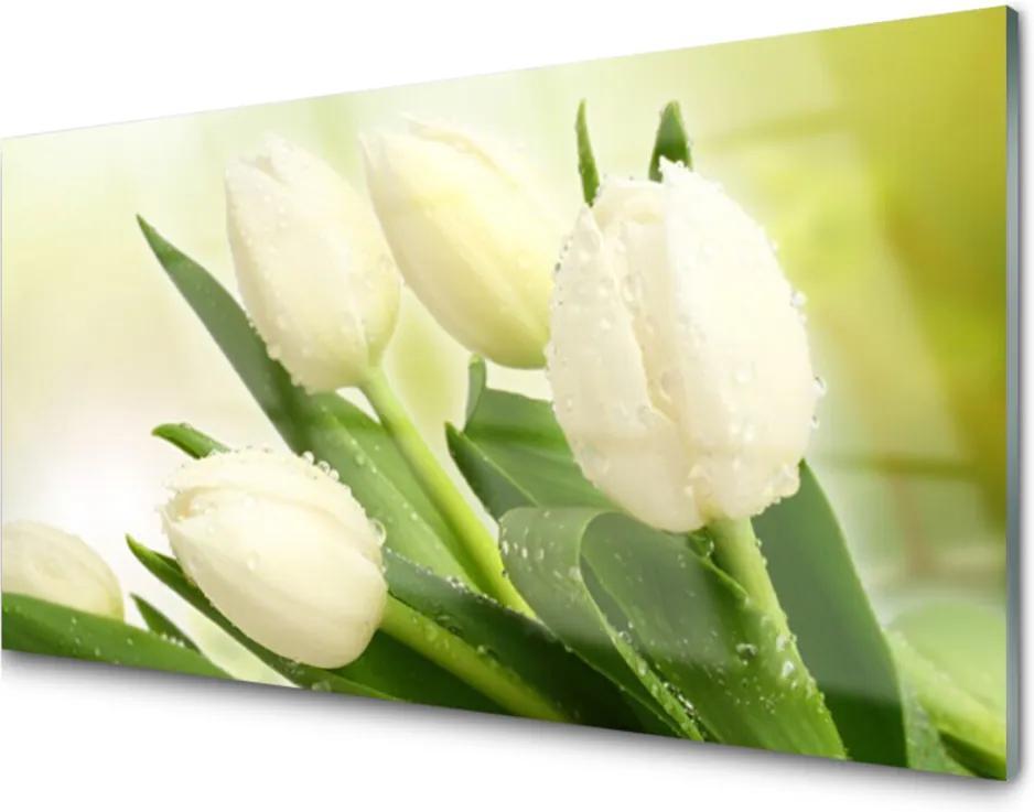 Obraz na skle Tulipány Květiny Rostlina