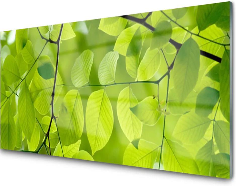 Obraz na akrylátovom skle Listy Príroda Rastlina