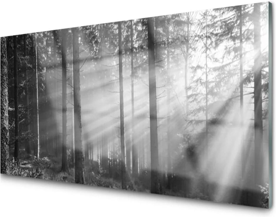 Plexisklo obraz Les příroda paprsky slunce