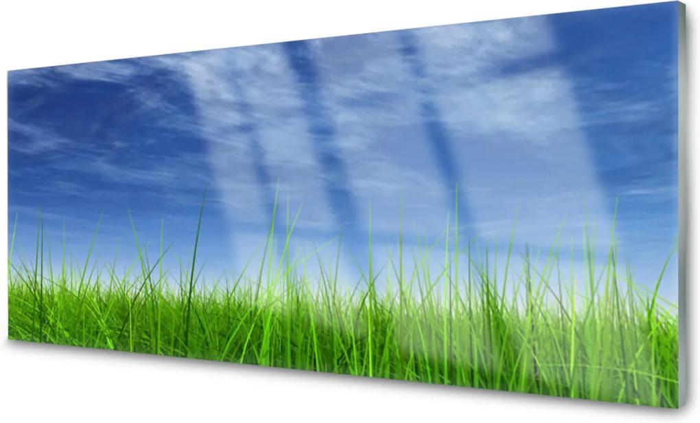 Obraz na skle Nebe tráva příroda