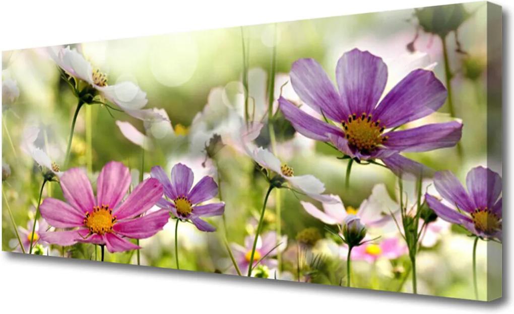 Obraz Canvas Kvety Rastlina Príroda