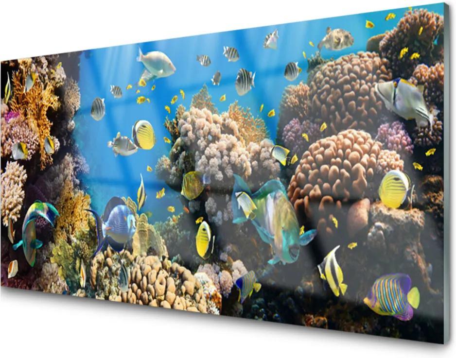 Akrylové obraz Korálový útes příroda