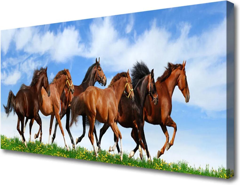 Obraz Canvas Cválající koně na pastvině