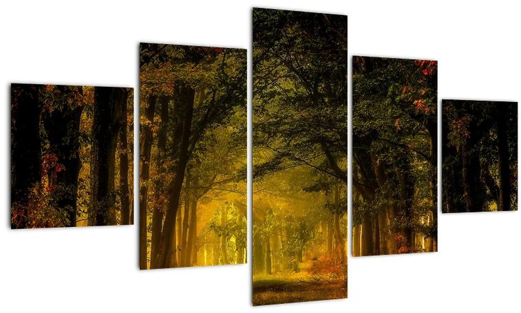Obraz lesu (125x70 cm), 40 ďalších rozmerov