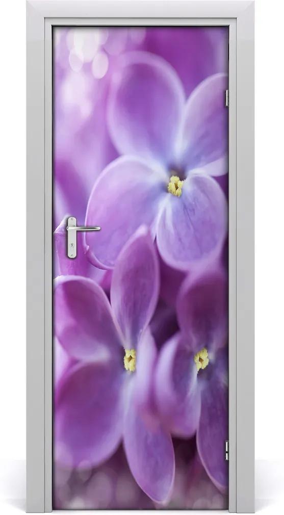 Fototapeta samolepící Květy bezu
