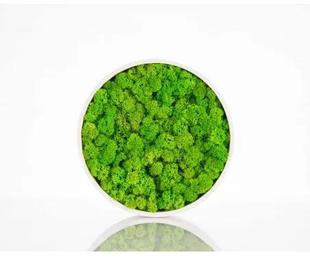 NORTH machový kruh Zelená 30 cm