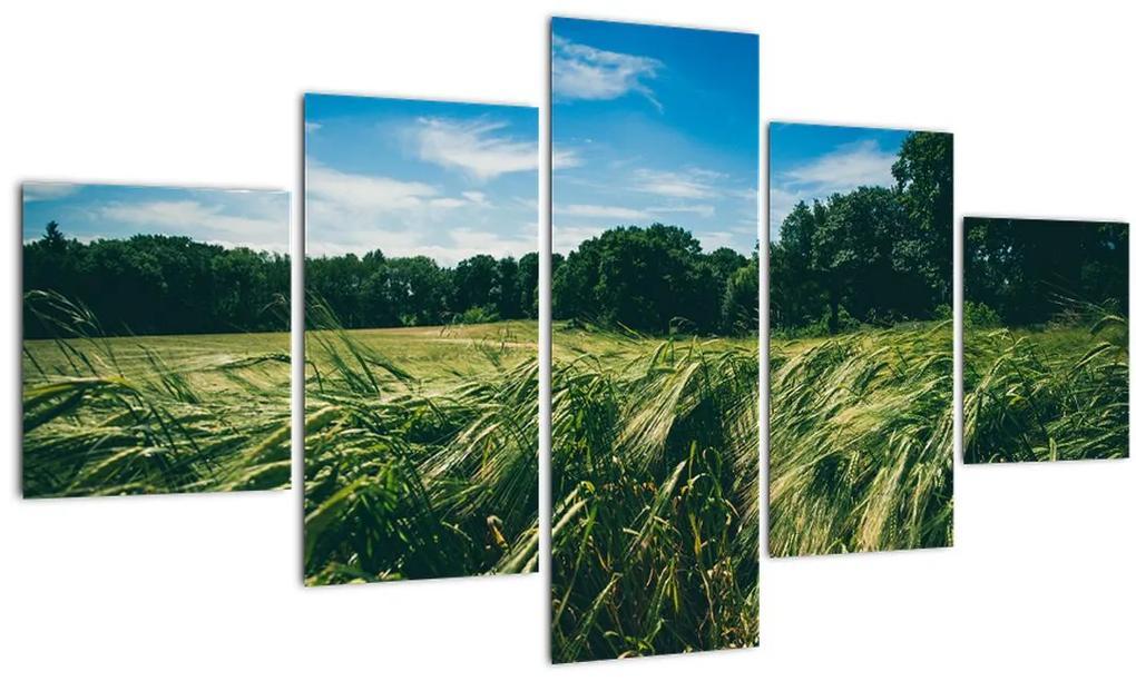 Obraz lúky a lesa (125x70 cm), 40 ďalších rozmerov