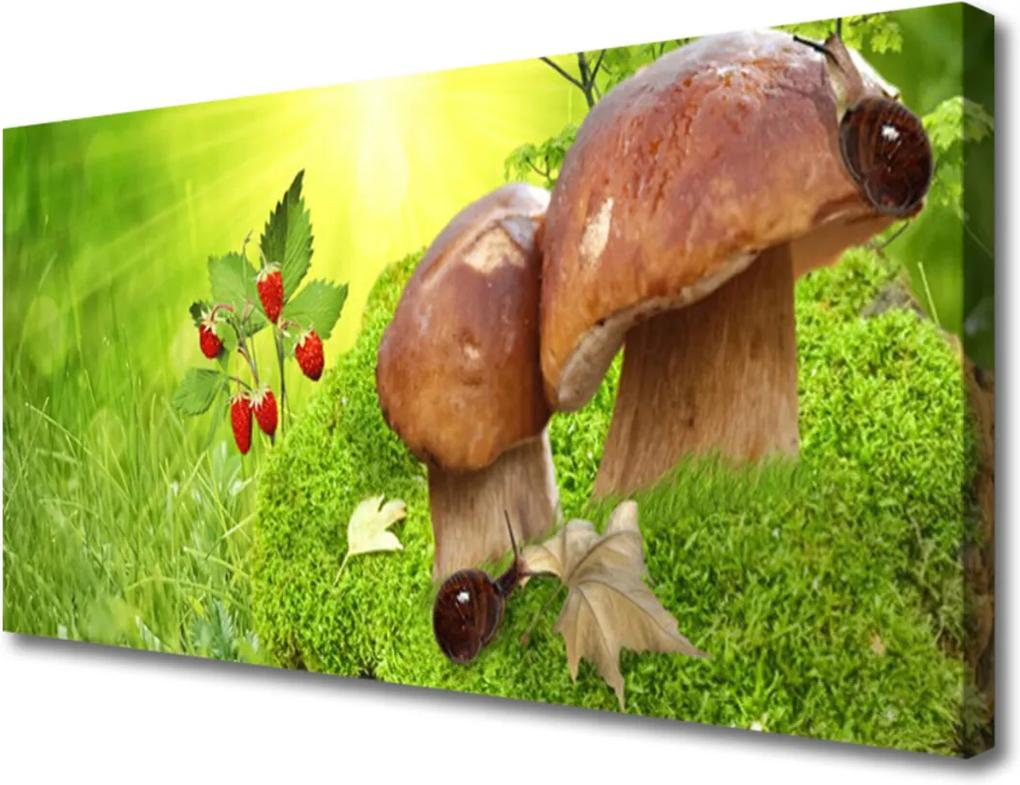 Obraz na plátně Houby divoké jahody