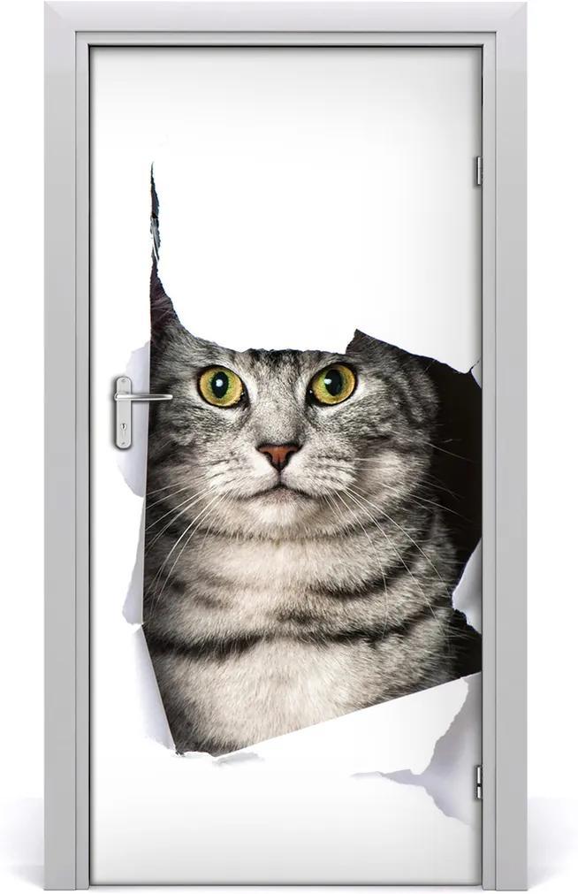 Fototapeta samolepící na dveře Kočka v díře
