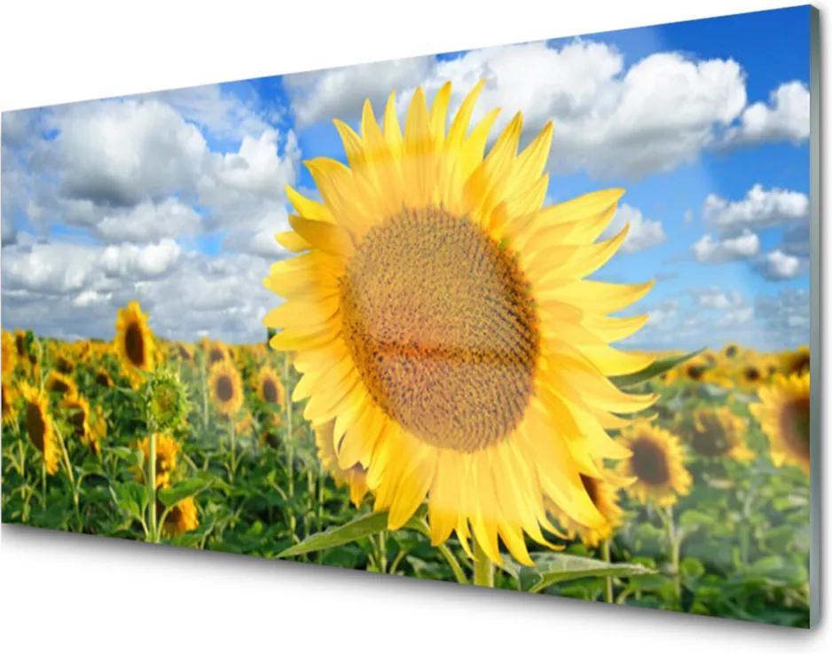 Obraz plexi Slnečnica Kvet Rastlina