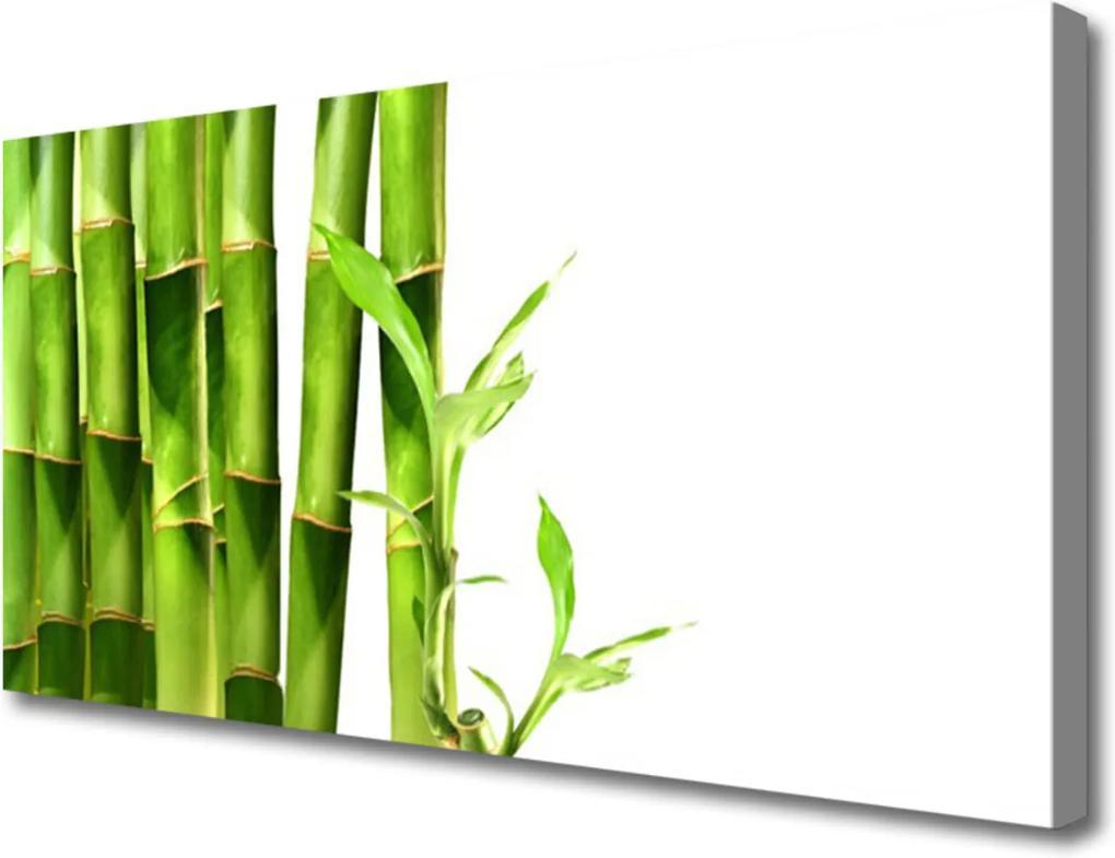 Obraz na plátně Sklenený Bambus Rastlina