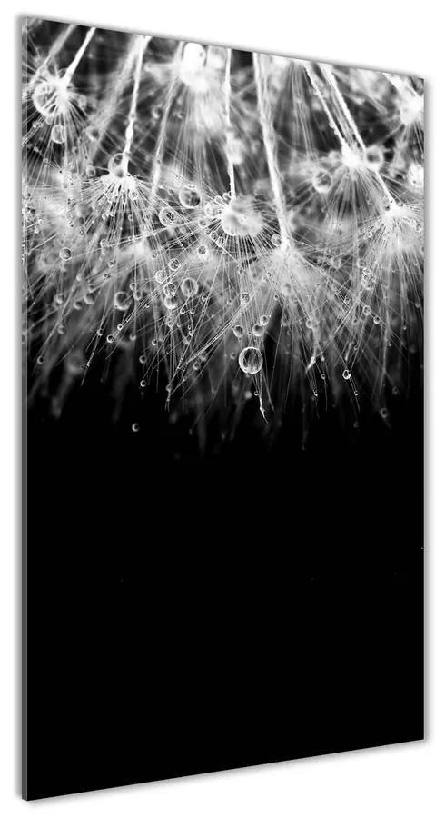 Foto obraz akrylový Semená púpavy pl-oa-70x140-f-67815967