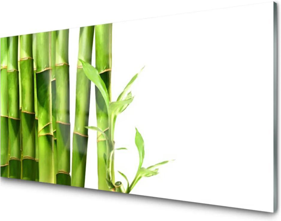 Obraz na skle Skleněný bambus rostlina