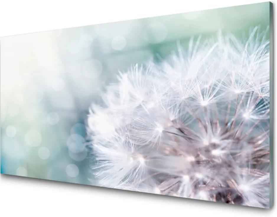 Obraz na akrylátovom skle púpava Rastlina