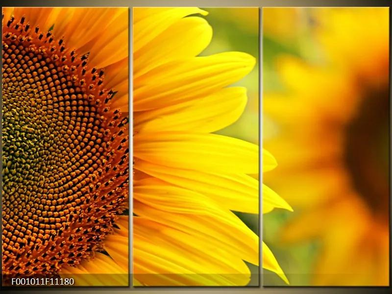 Obrazy - kvety