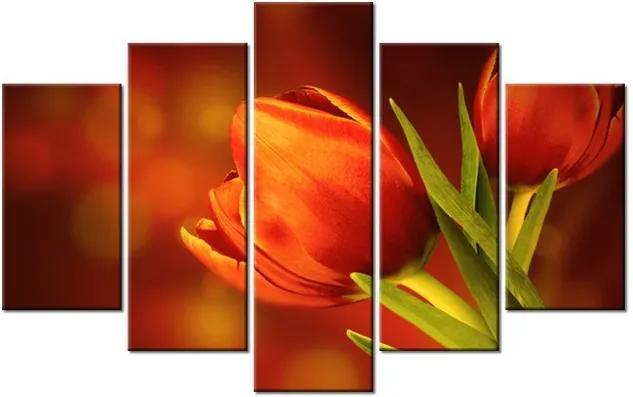 Tlačený obraz Tajomné červené tulipány 100x63cm 1256A_5D