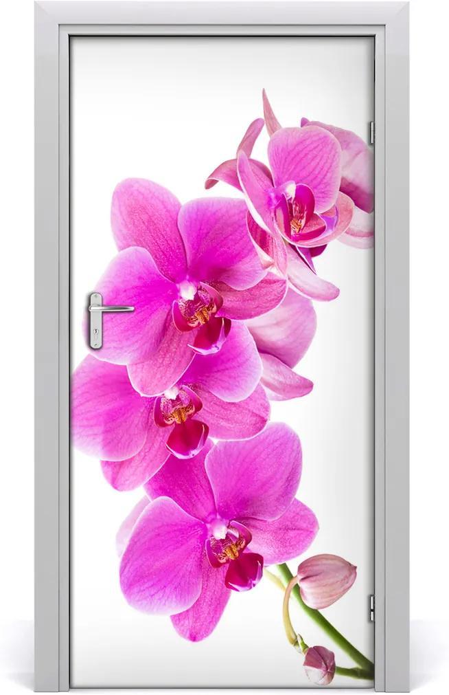 Fototapeta samolepící Růžová orchidej
