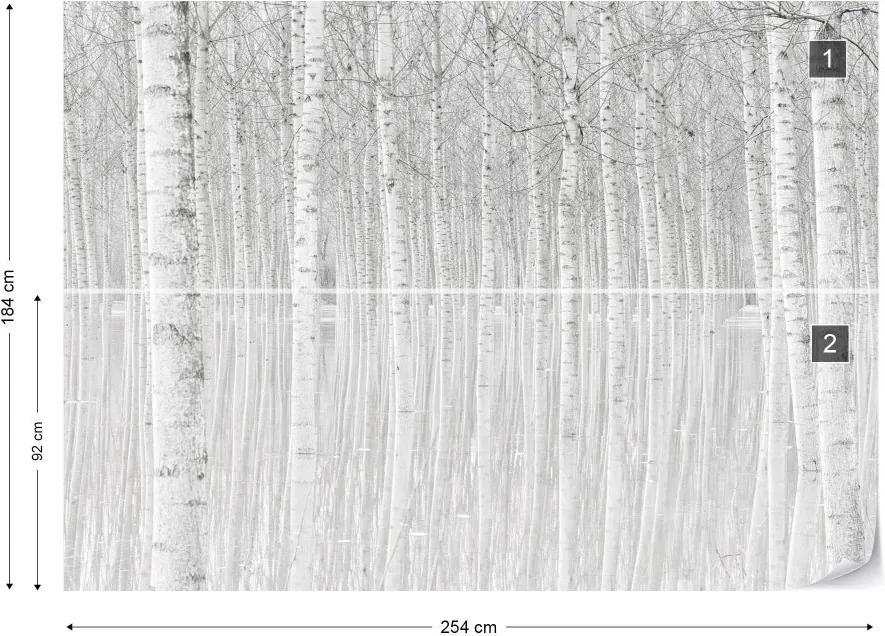 Fototapeta GLIX - Trees + lepidlo ZADARMO Vliesová tapeta  - 254x184 cm