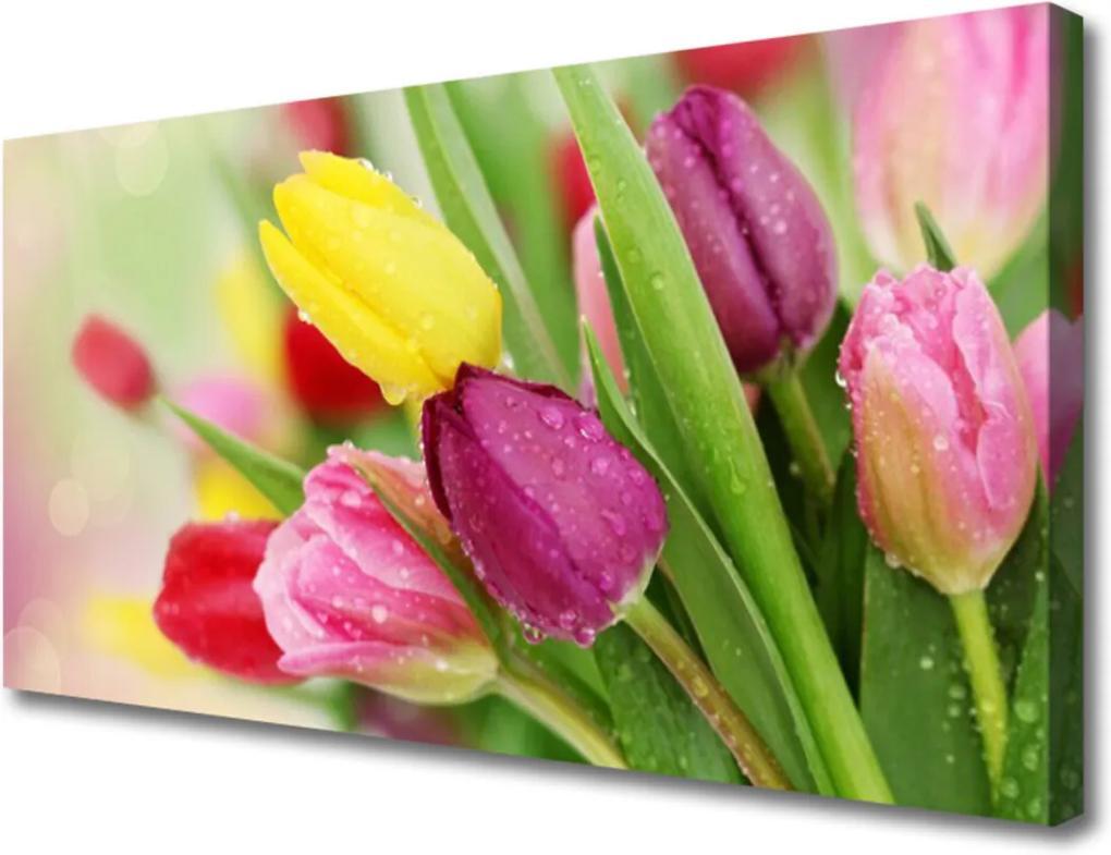 Obraz na plátně Tulipány květiny rostlina