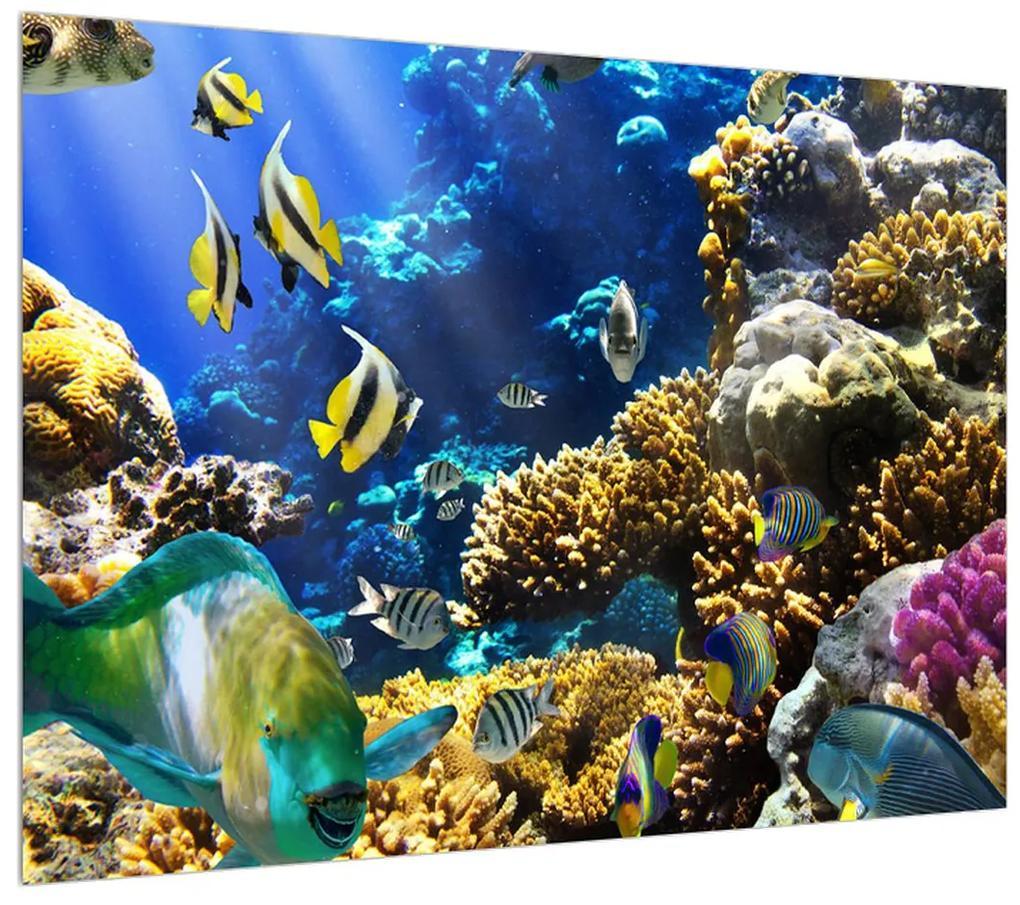 Obraz podmorského sveta (K011347K7050)