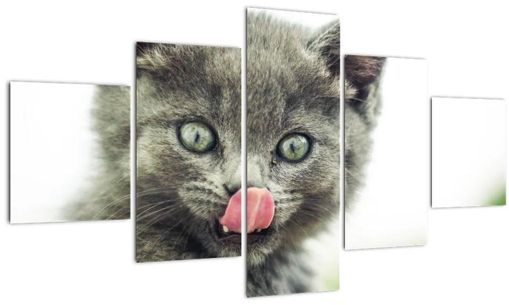 Obraz oblizujícího sa mačiatka (125x70 cm), 40 ďalších rozmerov