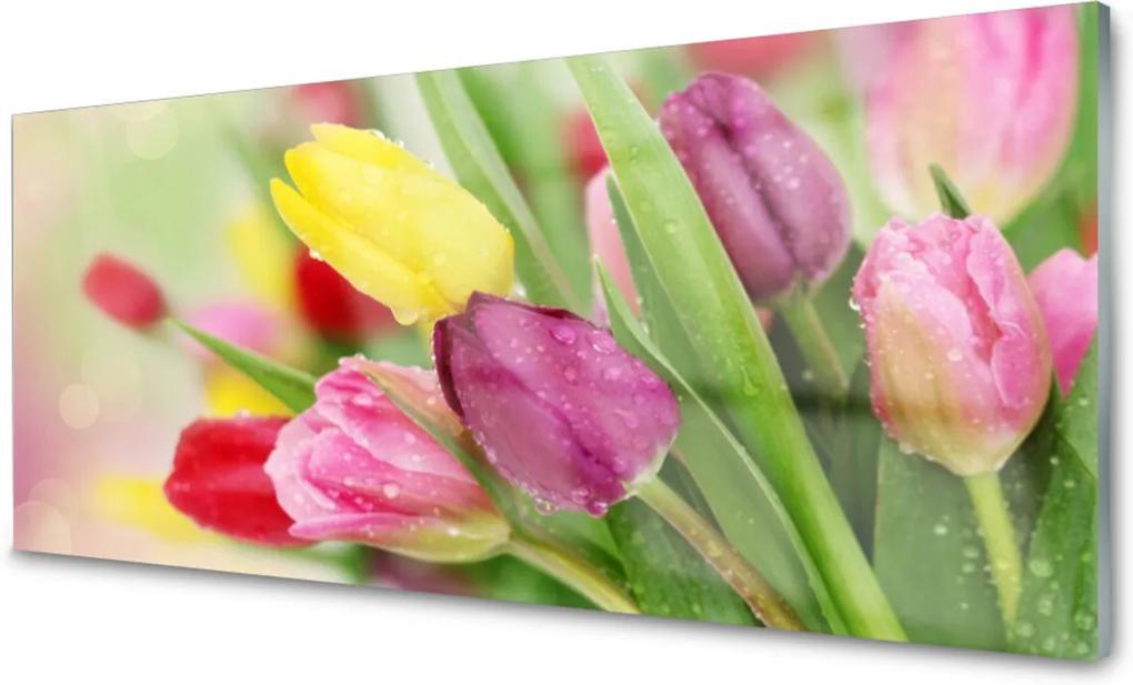 Obraz na skle Tulipány Kvety Rastlina