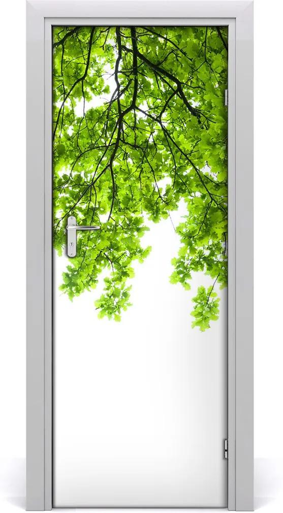 Fototapeta samolepící Koruna stromu