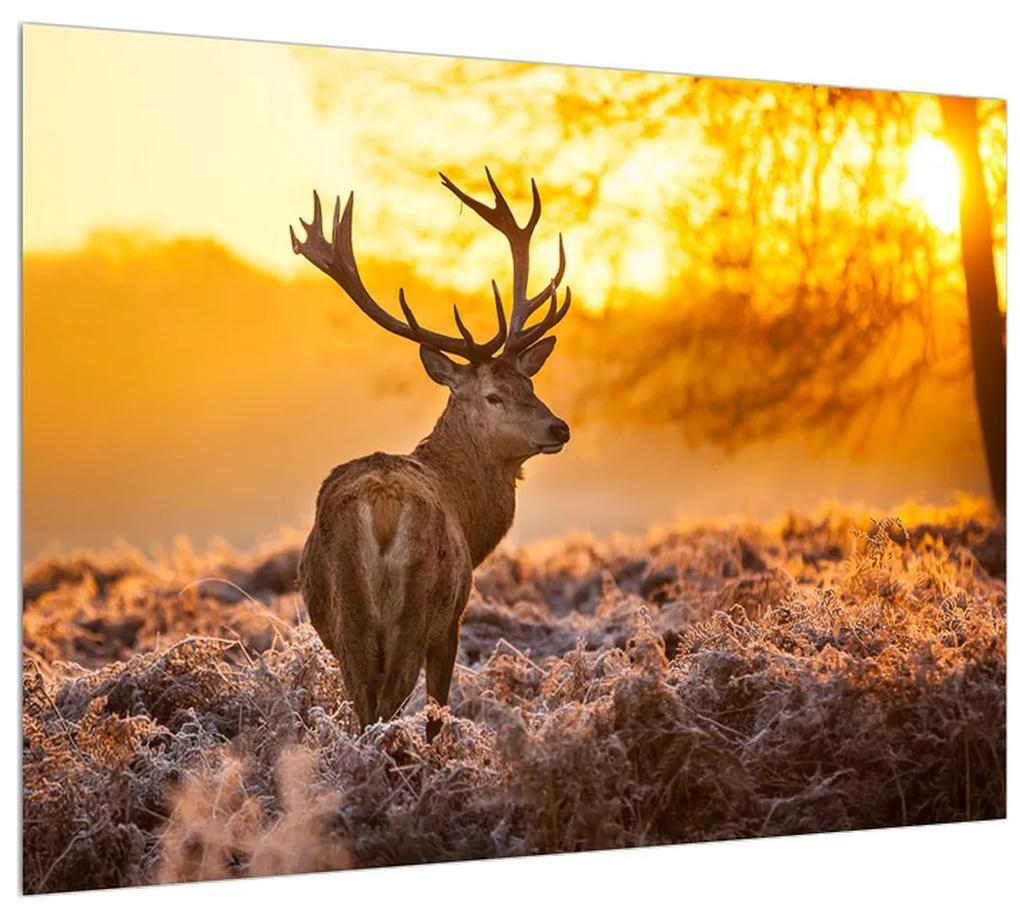 Obraz jeleňa (K011281K7050)