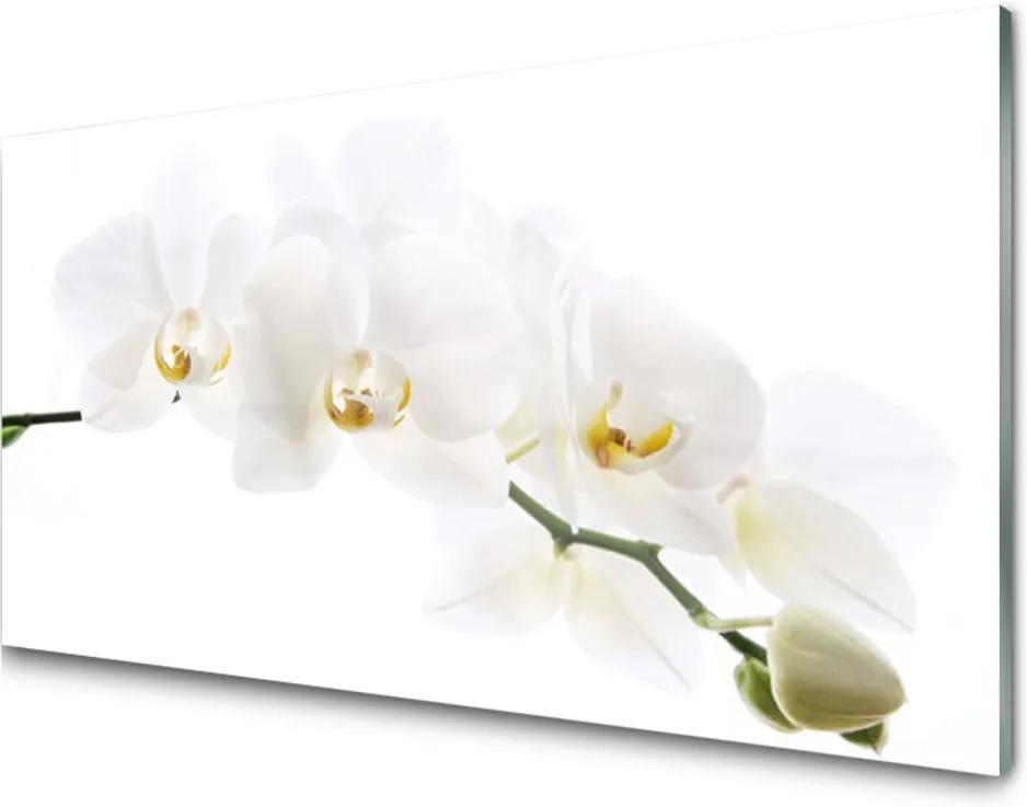 Obraz na skle Skleněný květíny rostlina