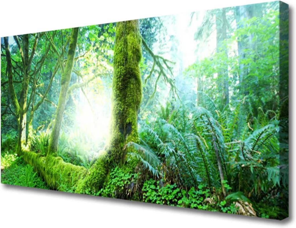 Obraz na plátně Skleněný les příroda