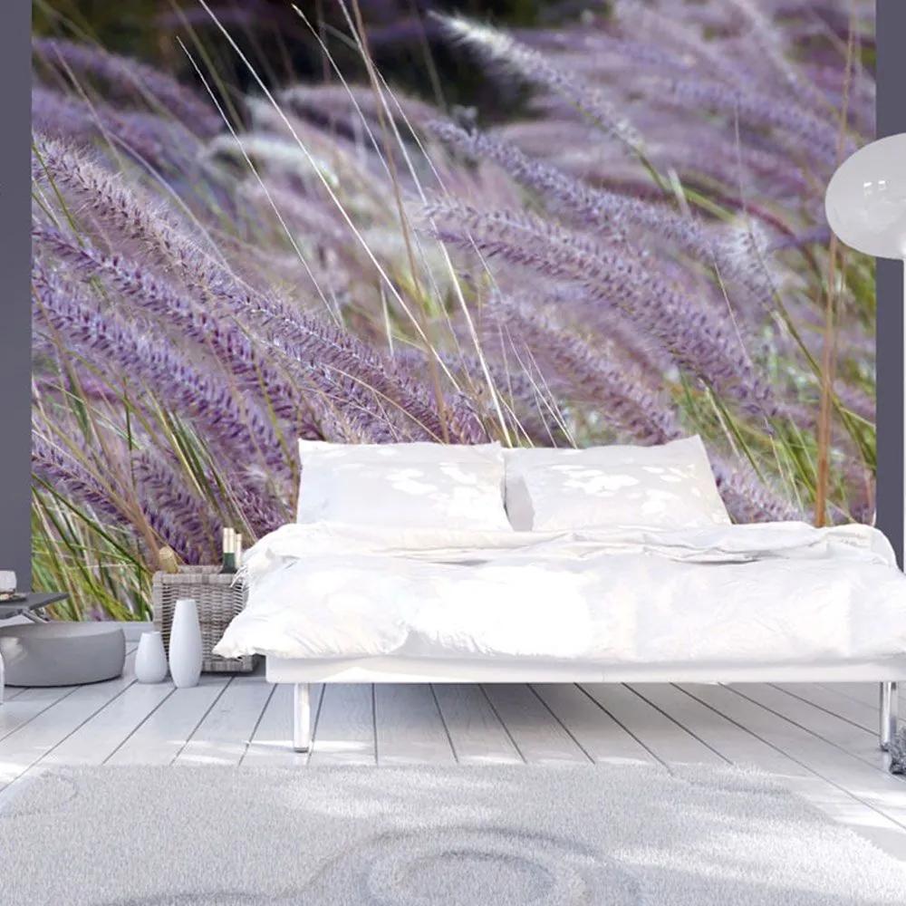 Fototapeta - Green field and purple flowers 200x154