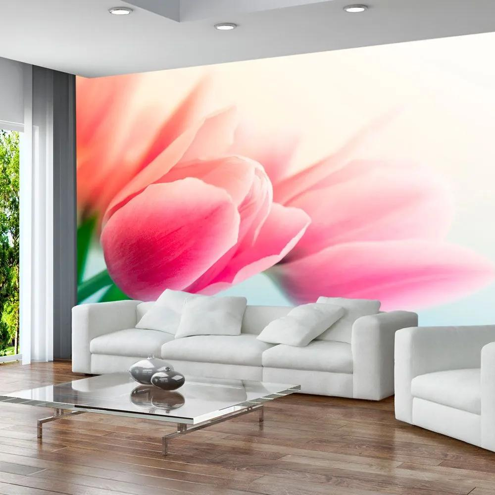 Fototapeta - Spring and tulips 200x154