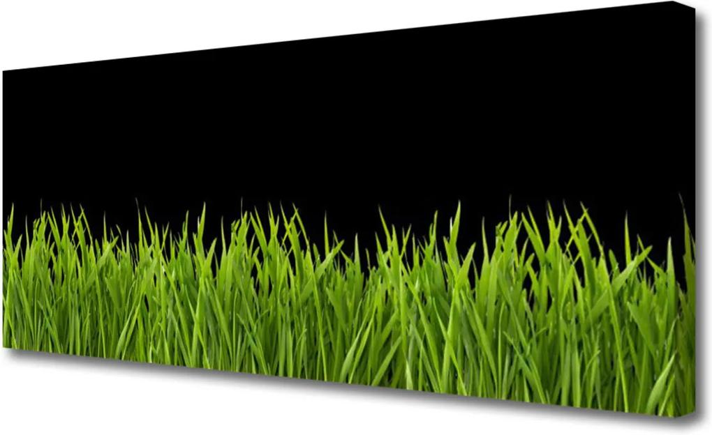 Obraz Canvas Zelená tráva příroda