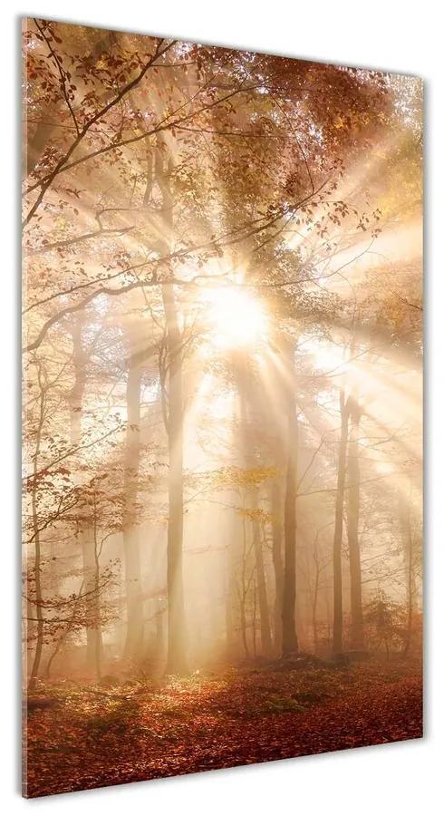 Moderný akrylový fotoobraz Les na jeseň pl-oa-70x140-f-119225469