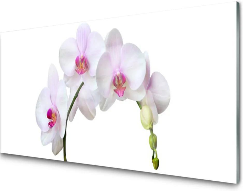 Skleněný obraz Vstavač Orchidea Kvety