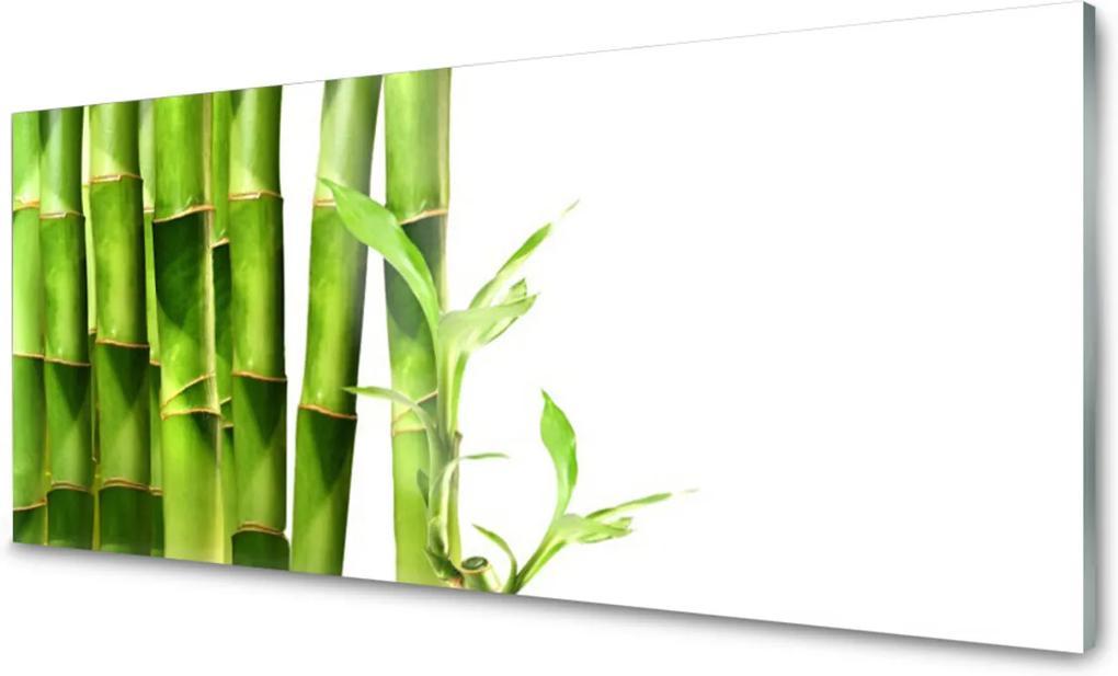 Obraz na skle Sklenený Bambus Rastlina